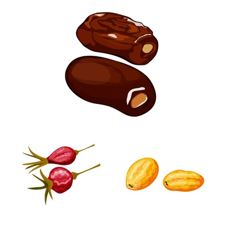 Isolated object of fruit and dried icon. Collection of fruit and food stock vector illustration. Illustration