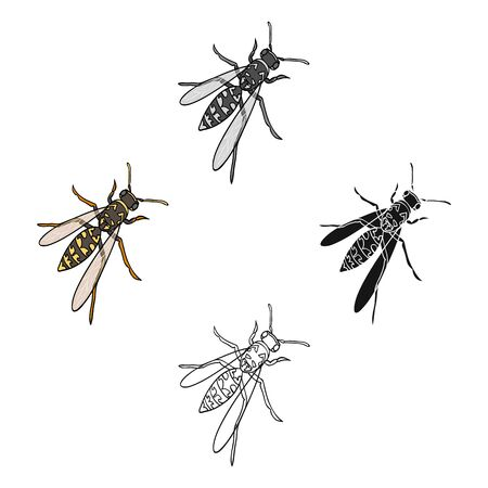 Wasp, hymenopteran insect.Wasp, stinging insect single icon in cartoon style bitmap symbol stock isometric illustration web. Stock Photo