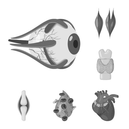 Isolated object of internal and medical icon. Set of internal and health stock bitmap illustration.