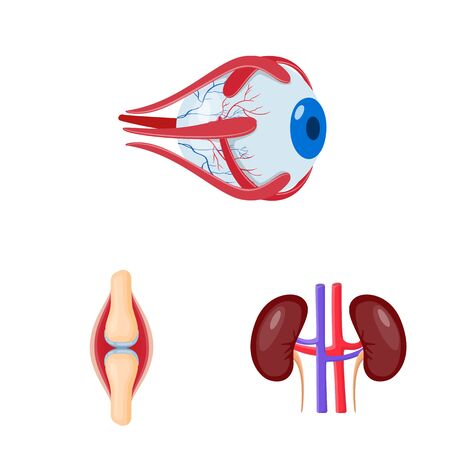 Isolated object of anatomy and organ symbol. Set of anatomy and medical vector icon for stock.