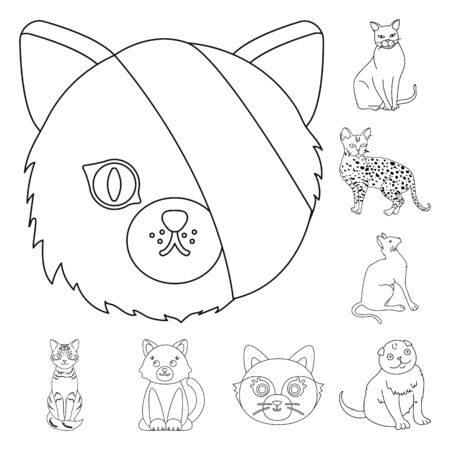 Isolated object of pet and sphynx icon. Set of pet and fun bitmap icon for stock.