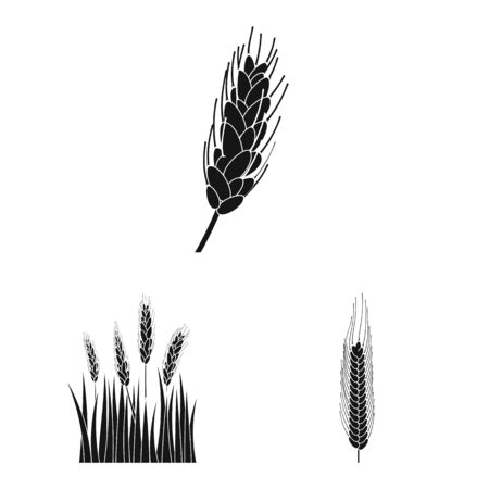 Isolated object of rye and plant icon. Set of rye and corn vector icon for stock.