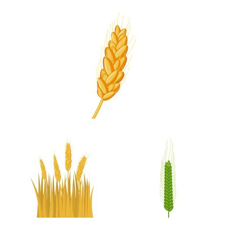 Vector illustration of wheat and corn sign. Collection of wheat and harvest vector icon for stock. 일러스트