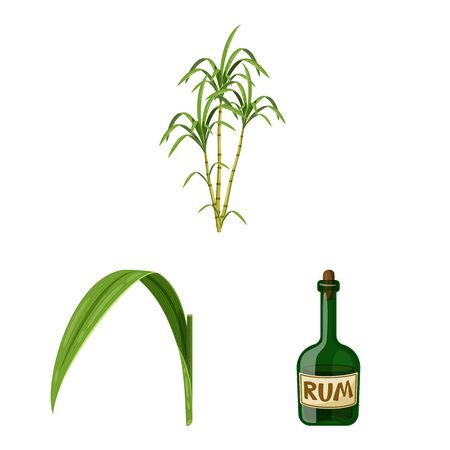 Isolated object of sugarcane and cane sign. Set of sugarcane and field stock symbol for web. Illustration