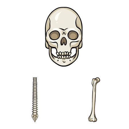 Vector illustration of bone and skeleton icon. Collection of bone and human stock symbol for web.