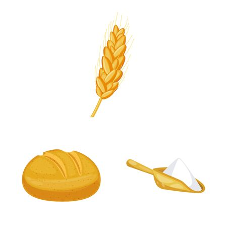 Isolated object of wheat and corn sign. Set of wheat and harvest stock vector illustration. 일러스트