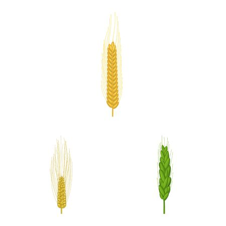 Vector illustration of wheat and corn sign. Set of wheat and harvest stock symbol for web.