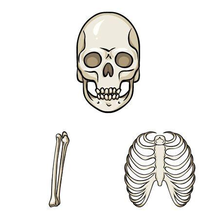 Vector illustration of bone and skeleton icon. Set of bone and human vector icon for stock.