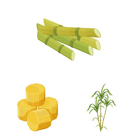 Isolated object of sugarcane and cane symbol. Collection of sugarcane and field vector icon for stock. Illustration