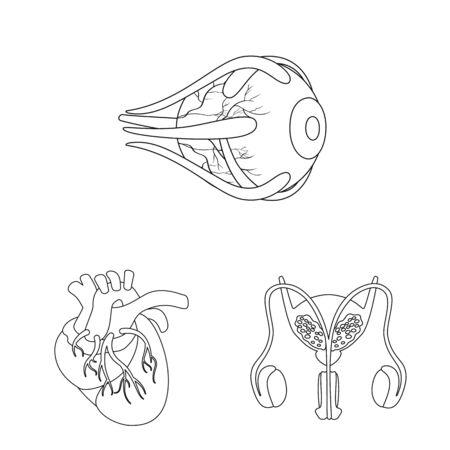 Vector illustration of anatomy and organ icon. Set of anatomy and medical vector icon for stock.