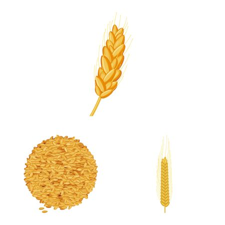 Vector design of wheat and corn symbol. Set of wheat and harvest vector icon for stock.