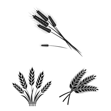 Isolated object of wheat and stalk icon. Collection of wheat and grain bitmap icon for stock. 版權商用圖片