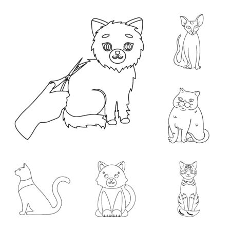 Isolated object of pet and sphynx. Collection of pet and fun stock bitmap illustration.
