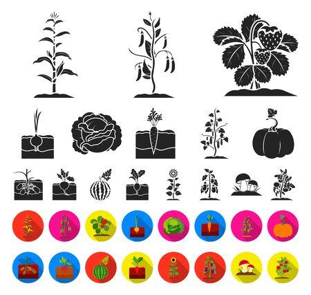 Plant, vegetable black,flat icons in set collection for design. Garden and harvest bitmap symbol stock web illustration. Zdjęcie Seryjne