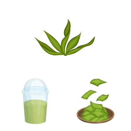 Isolated object of spirulina and seaweed. Set of spirulina and vegan stock vector illustration.