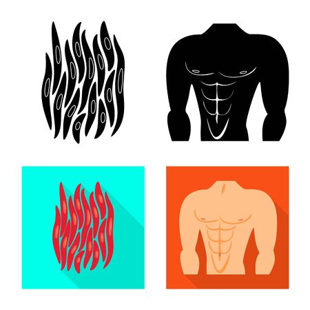 Vector design of fiber and muscular . Collection of fiber and body stock symbol for web.
