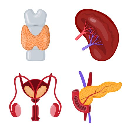 Vector design of anatomy and organ symbol. Set of anatomy and medical stock symbol for web.