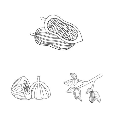 Vector design of cocoa and beans . Collection of cocoa and sweetness stock vector illustration.