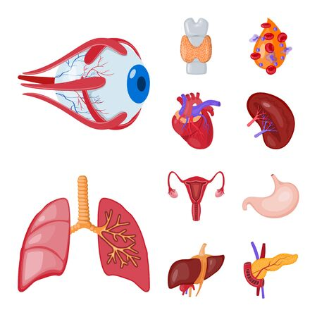 Vector design of anatomy and organ symbol. Collection of anatomy and medical vector icon for stock.
