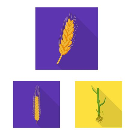 Vector illustration of wheat and corn sign. Collection of wheat and harvest stock symbol for web. 일러스트