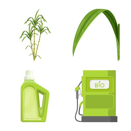 Vector illustration of sugarcane and cane. Collection of sugarcane and field stock symbol for web.