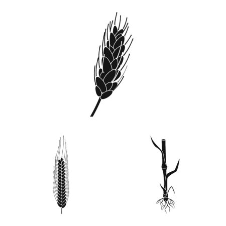 Vector design of rye and plant symbol. Collection of rye and corn vector icon for stock. Иллюстрация