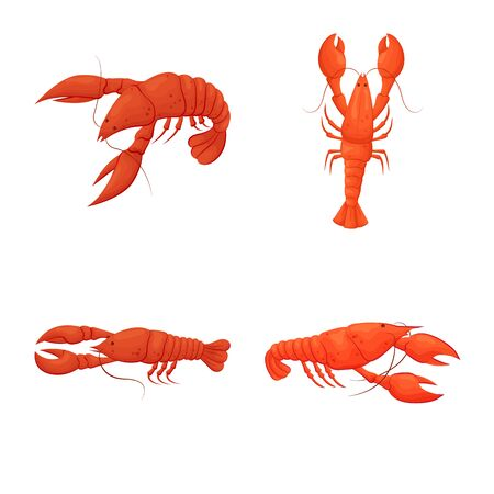 Isolated object of shrimp and crab sign. Set of shrimp and sea stock symbol for web. Çizim