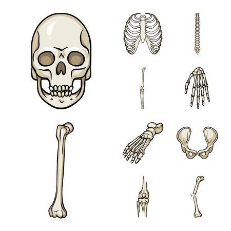 Vector illustration of bone and skeleton. Set of bone and human stock vector illustration. Ilustração