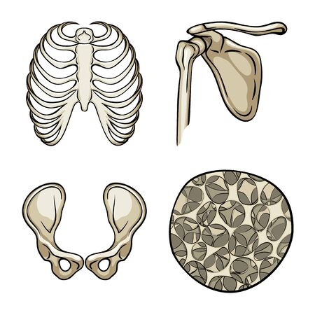 Vector design of bone and skeleton. Set of bone and human stock vector illustration. Banco de Imagens - 129530249