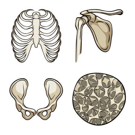 Vector design of bone and skeleton. Set of bone and human stock vector illustration.