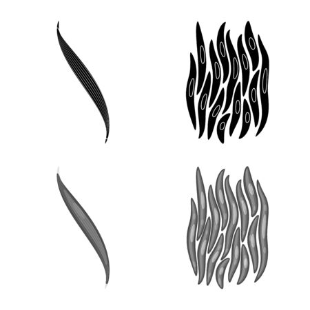 Vector illustration of fiber and muscular icon. Collection of fiber and body stock vector illustration.