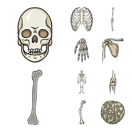 Vector design of bone and skeleton. Collection of bone and human stock vector illustration.
