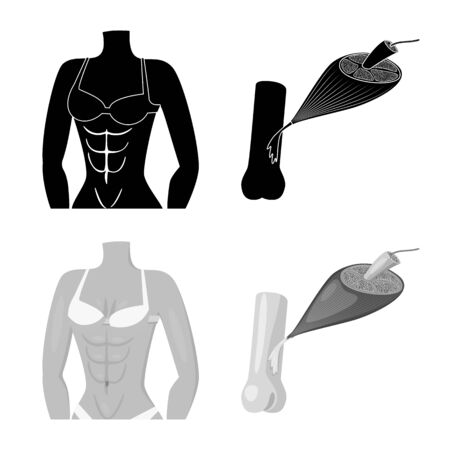 Isolated object of fiber and muscular icon. Set of fiber and body stock vector illustration.  イラスト・ベクター素材