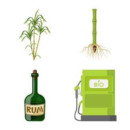 Vector design of sugarcane and cane icon. Collection of sugarcane and field vector icon for stock.