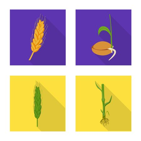Isolated object of wheat and corn. Collection of wheat and harvest stock symbol for web.