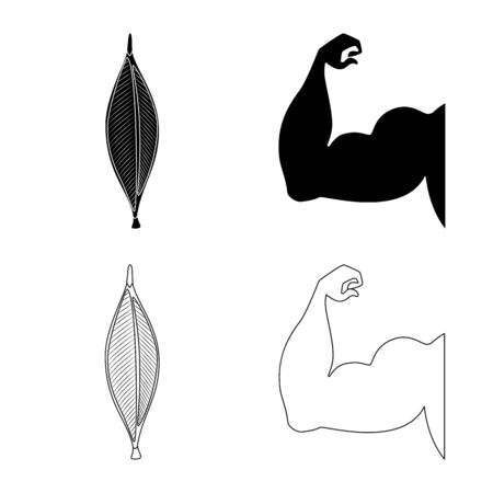 Vector illustration of fiber and muscular icons. Collection of fiber and body vector icon for stock.