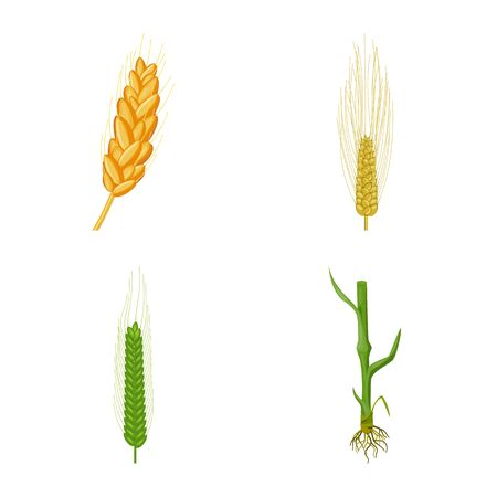 Vector design of wheat and corn icon. Set of wheat and harvest vector icon for stock. Ilustração