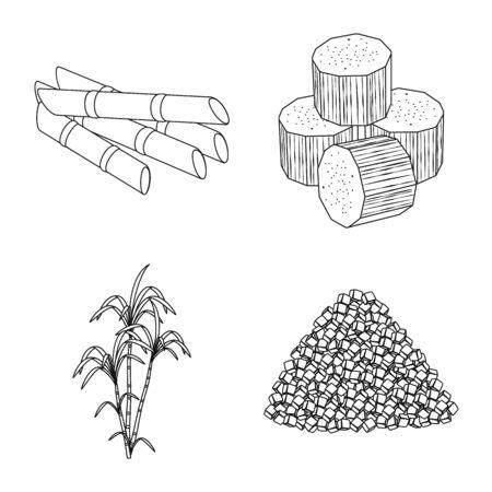 Vector illustration of sugar and field . Collection of sugar and plantation vector icon for stock. Çizim