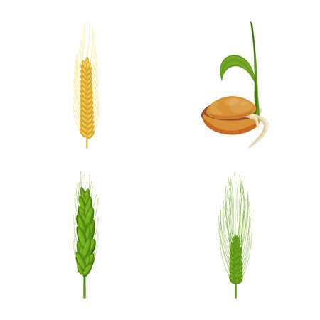 Vector design of wheat and corn . Set of wheat and harvest vector icon for stock. Banque d'images - 129853400