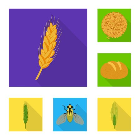 Vector illustration of wheat and corn. Collection of wheat and harvest vector icon for stock.