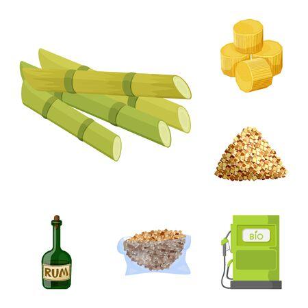 Isolated object of sugarcane and cane symbol. Collection of sugarcane and field stock symbol for web.