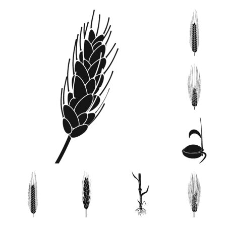 Vector illustration of rye and plant symbol. Collection of rye and corn stock symbol for web.