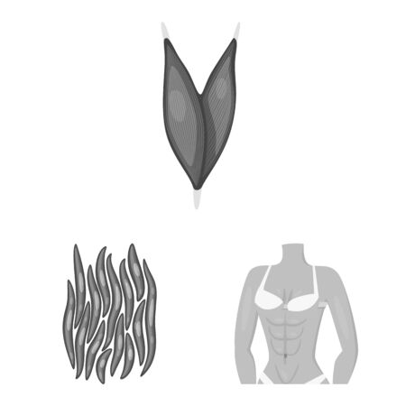Isolated object of human and body sign. Set of human and cells vector icon for stock.