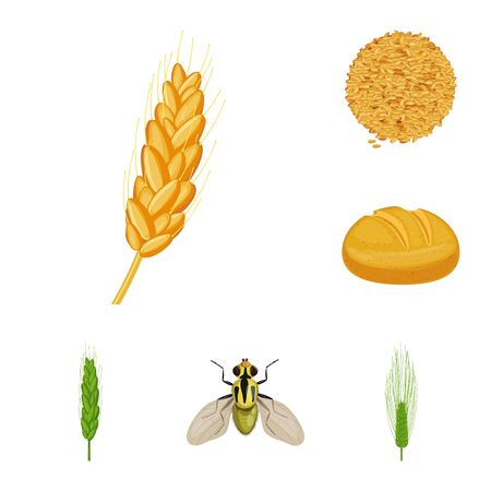 Vector design of wheat and corn sign. Collection of wheat and harvest stock vector illustration.