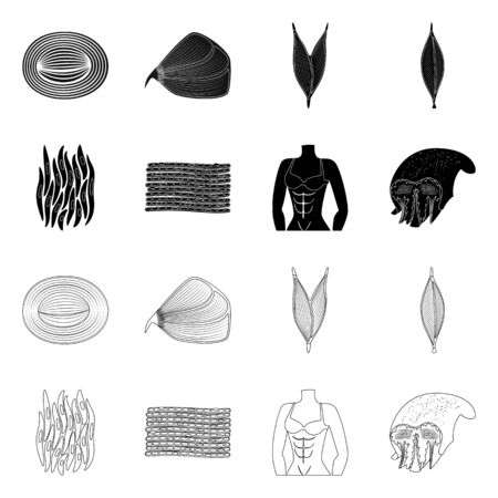 Vector design of fiber and muscular symbol. Set of fiber and body vector icon for stock.