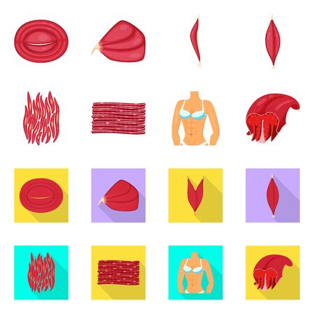 Vector design of fiber and muscular logo. Set of fiber and body vector icon for stock. Stock Illustratie