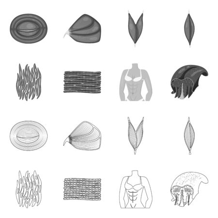 Isolated object of fiber and muscular logo. Collection of fiber and body vector icon for stock.