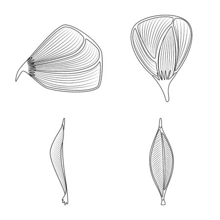 Vector design of fiber and muscular logo. Set of fiber and body stock vector illustration.