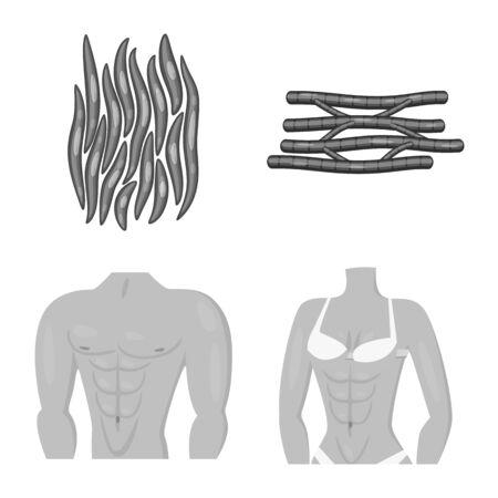 Vector illustration of human and body symbol. Set of human and cells stock vector illustration.  イラスト・ベクター素材