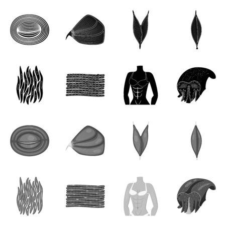 Vector design of fiber and muscular symbol. Set of fiber and body stock vector illustration. Illustration